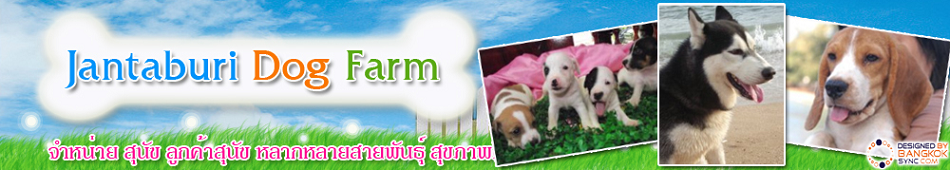 Chanthaburi Dog Farm